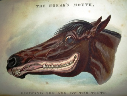 Illustration from Edward Mayhew's The Horses mouth: showing the age by the teeth