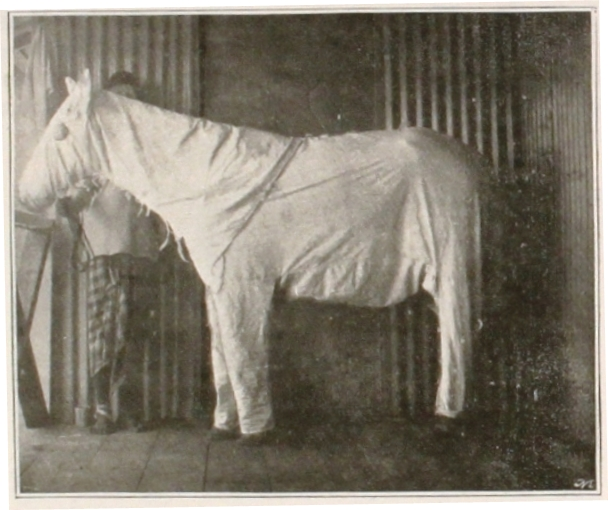 Pony in pyjamas as a protection against tsetse fly