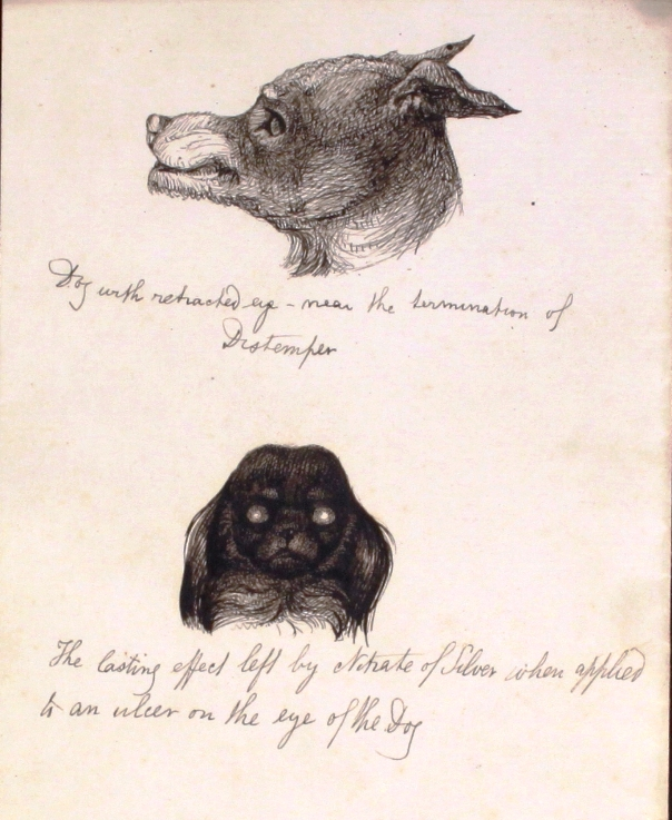 Illustration of dogs by Edward Mayhew