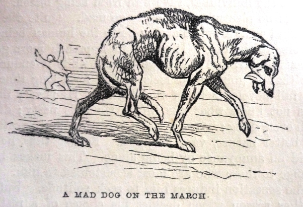Edward Mayhew's Dogs: their management - A mad dog on the march