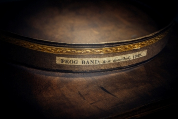 Bracy Clark hoof - frog band