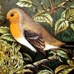 Image of Robin from The Smaller British birds with descriptions of their nests, eggs, habits, etc